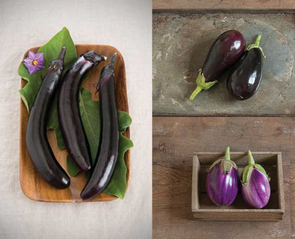 Eggplant Collection
