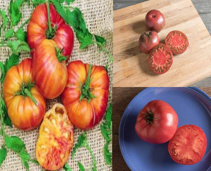 Heirloom Tomato Collection