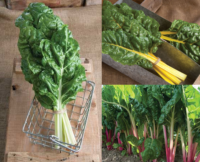 Swiss Chard Collection