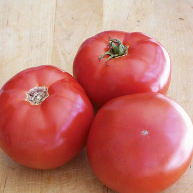 BHN-589 Grafted Tomato