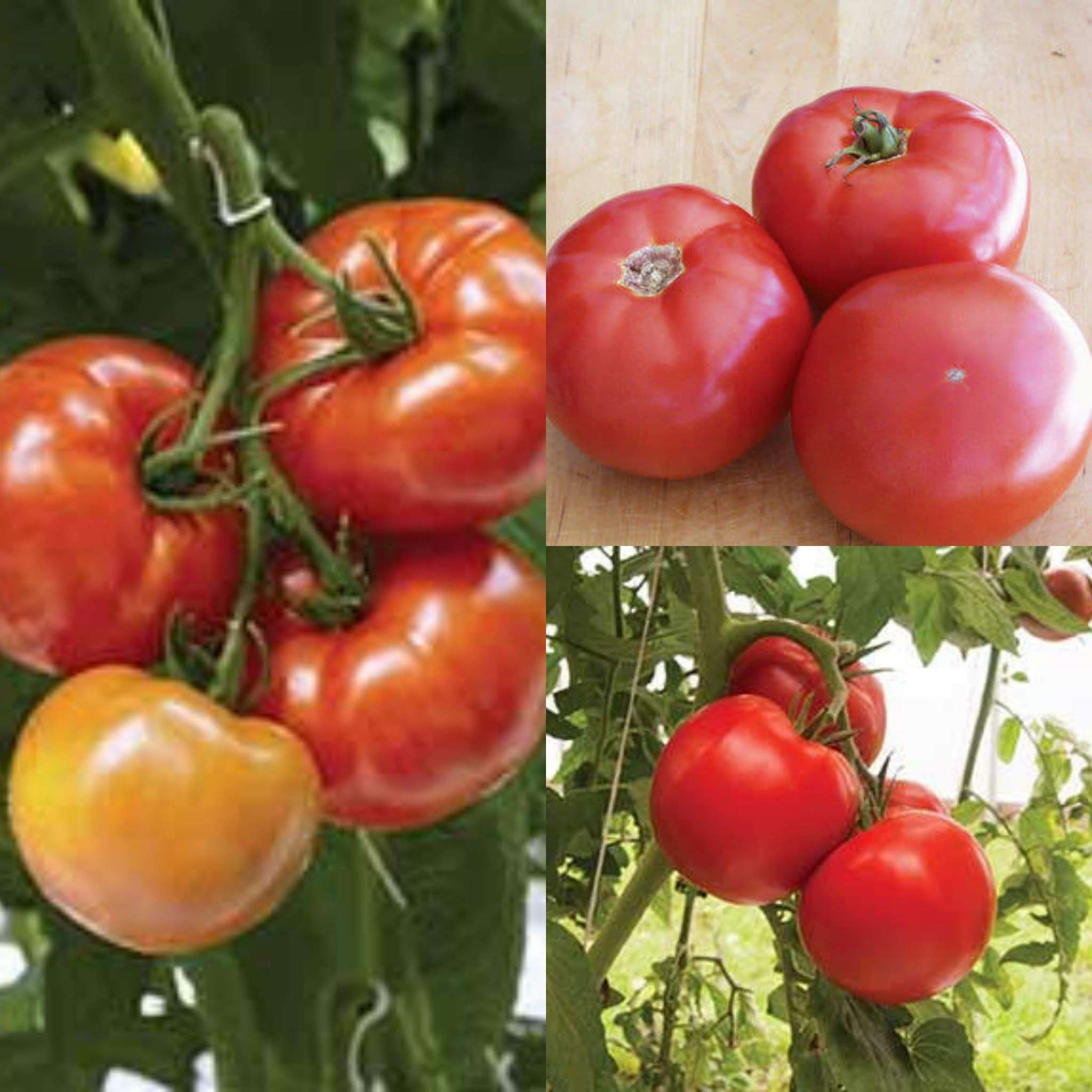 Greenhouse Favorites Mix Grafted