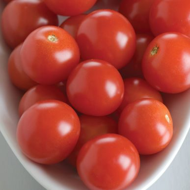 BHN-968 Grafted Tomato