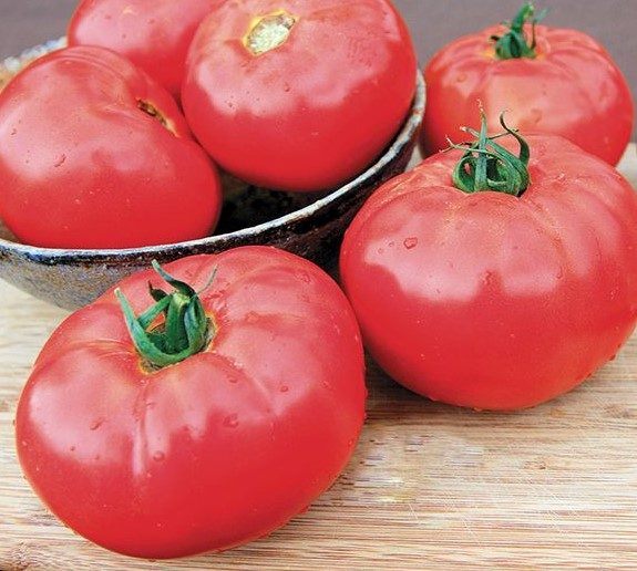 Caiman Grafted Tomato