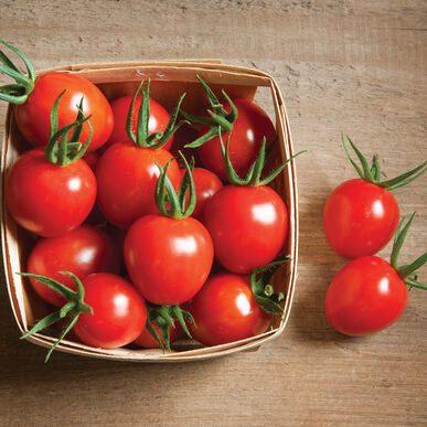 Cherry Bomb Tomato