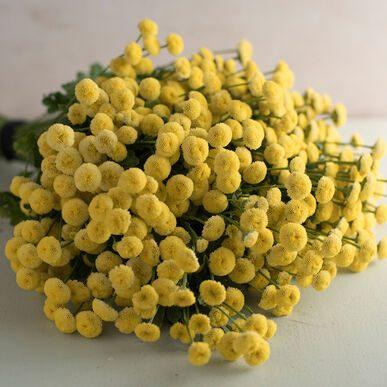 Vegmo Sunny Ball Matricaria (Non-Organic)
