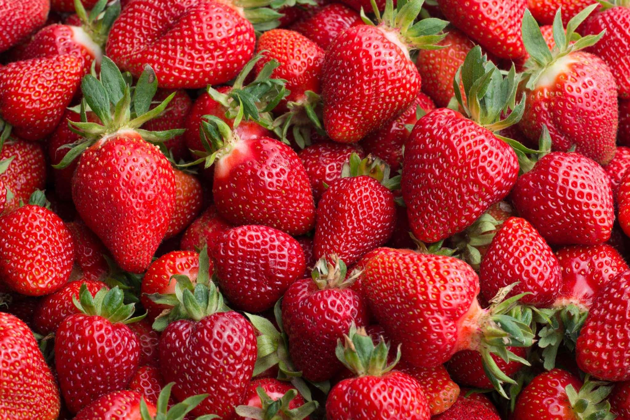 Camino Real Strawberry