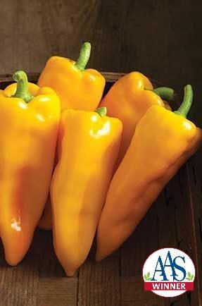 Escamillo Pepper