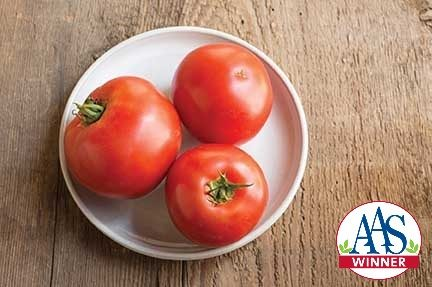 Big Beef Grafted Tomato