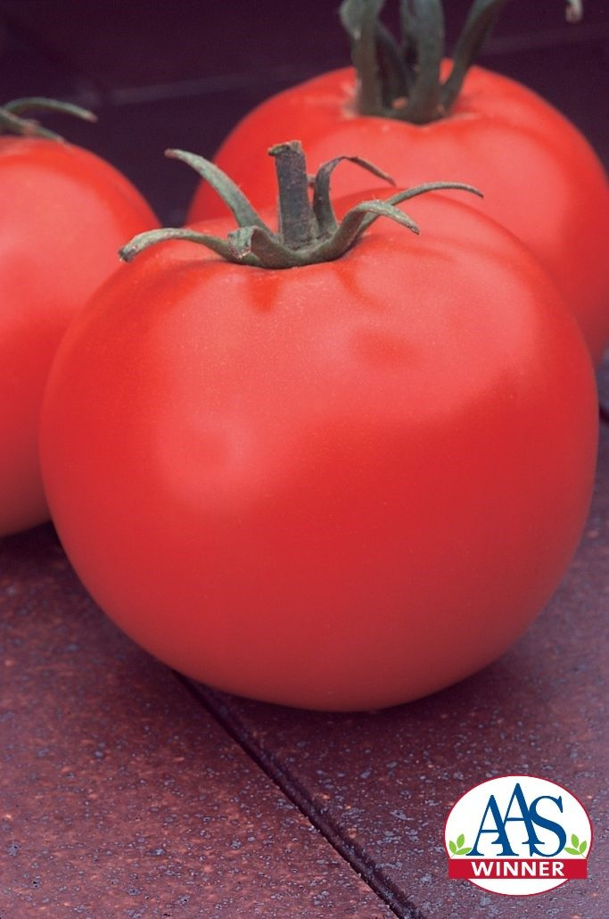 Celebrity Grafted Tomato