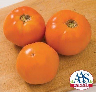 Chef's Choice Orange Tomato