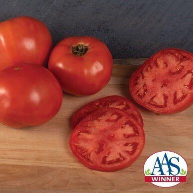 Galahad Tomato