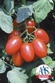 Juliet Grafted Tomato