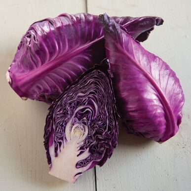 Candy Red Cabbage CA