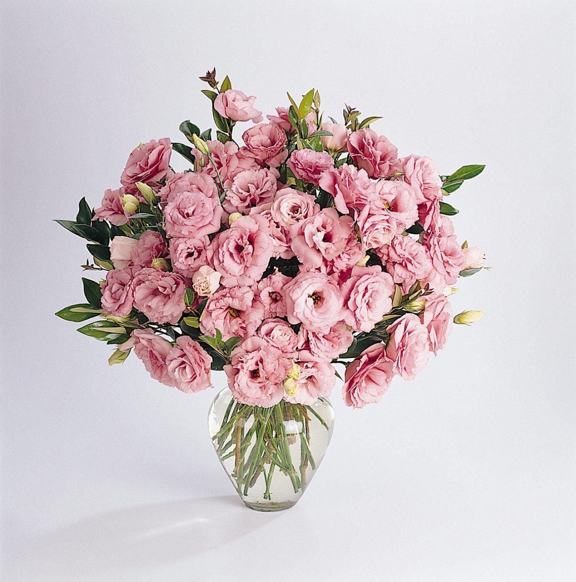 ABC 1 Deep Rose Lisianthus (Non-Organic)