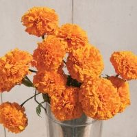 Companion, Cut and Edible Flowers