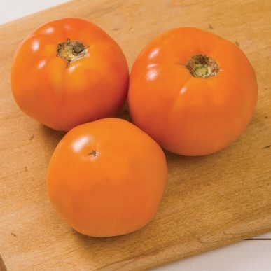 Chef's Choice Grafted Tomato