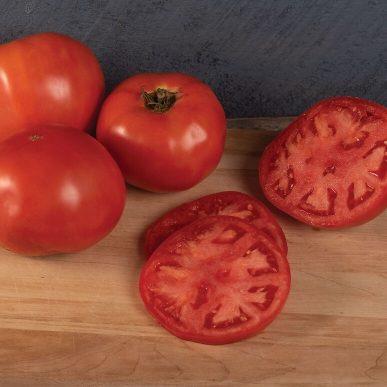 Galahad Grafted Tomato