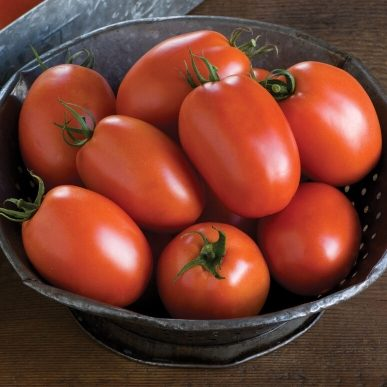 Plum Regal Grafted Tomato